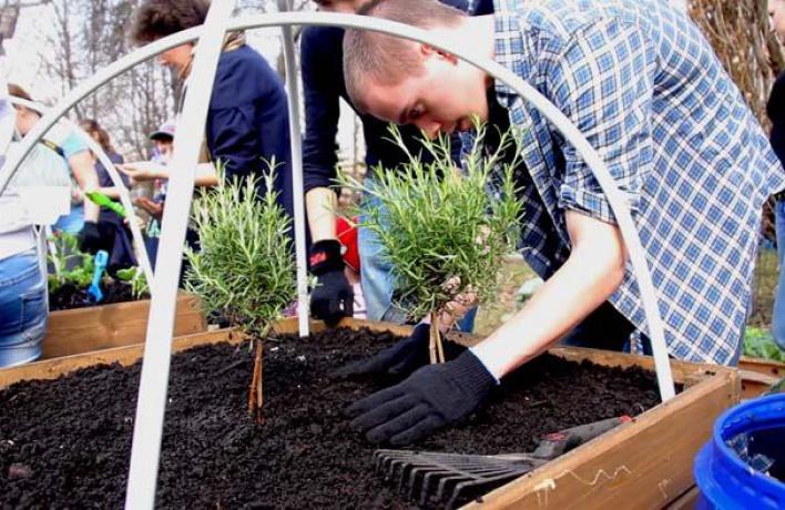 Московские парки превратят в огороды