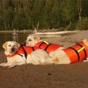 Зоны отдыха начнут патрулировать собаки-спасатели
