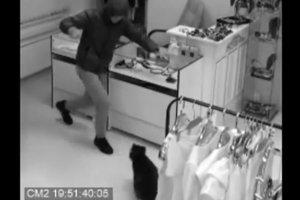 Енот, спасший магазин от грабителя, впал в депрессию