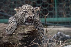 В Москве собираются открыть центр передержки диких животных