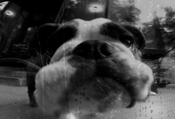 Собачье сердце - Фото №0