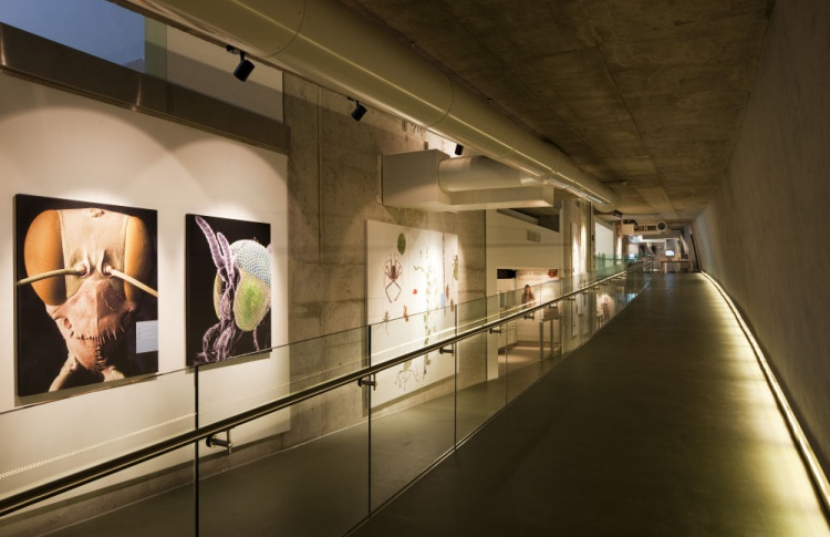 Лекция Лоне Виггерс «Музейная архитектура бюро C.F. Møller (Дания)»