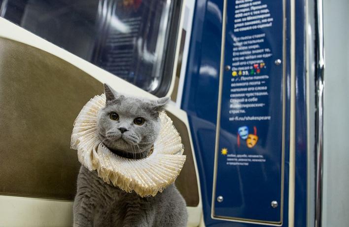Британский кот стал первым пассажиром «шекспировского» поезда