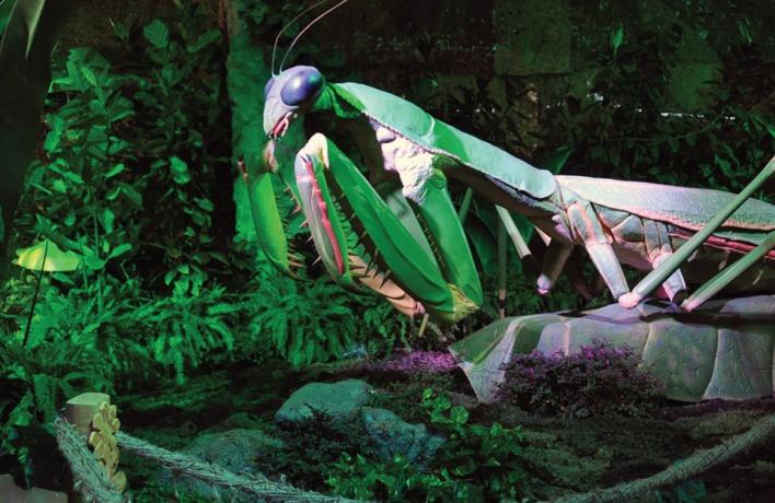 Гигантские букашки в Московском зоопарке