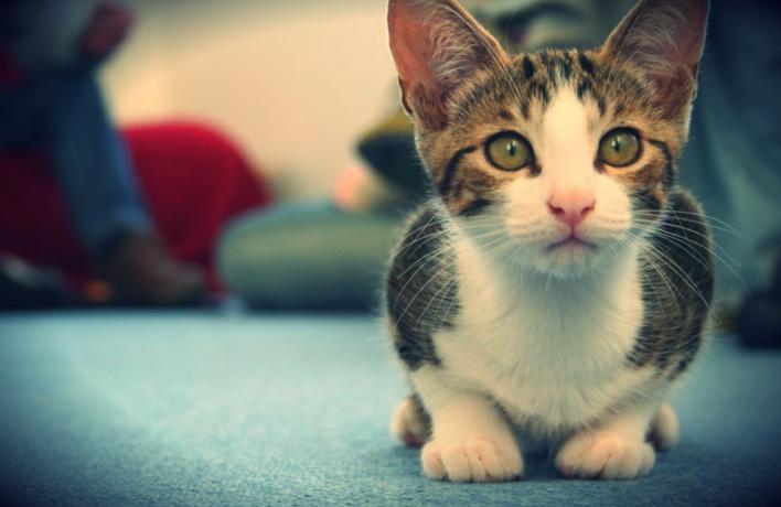 Без лишнего шума. Как наука помогает решить проблему «топота котов»