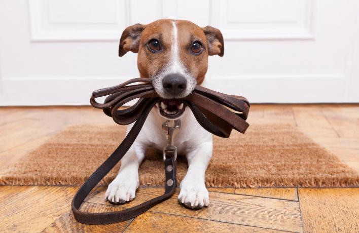 Кто погуляет с вашей собакой?<br> 5 сервисов по выгулу собак