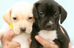 Как выбрать щенка: три главных правила