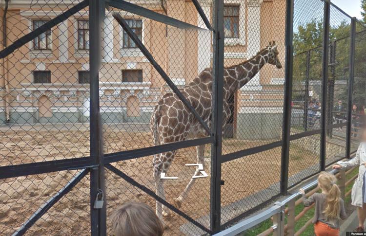 На панорамах Google появился Московский зоопарк