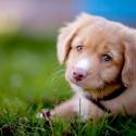 Как понять, готовы ли вы к животному в доме