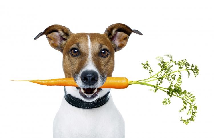 Учим алфавит. Какие витамины нужны кошкам и собакам?