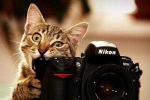 Свет, камера, мотор!