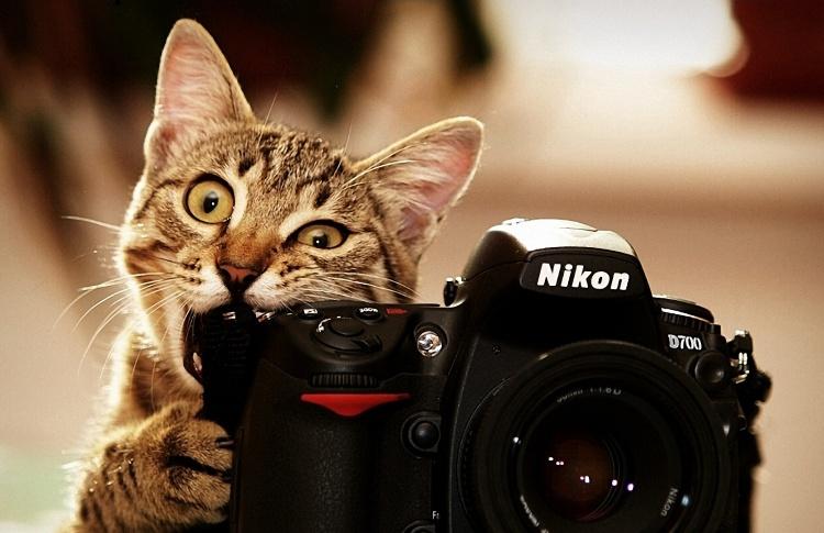 Топ-10 самых смешных видео про животных