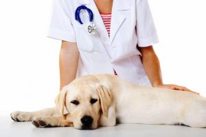 Стерилизация собак и кошек: за и против