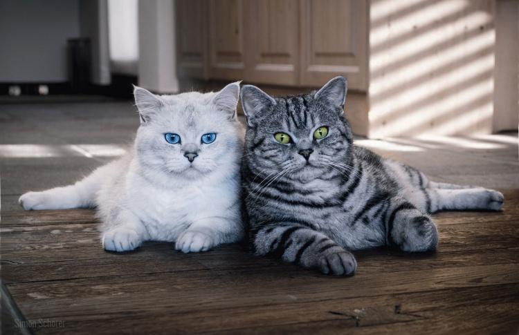 Самые уникальные породы кошек и собак