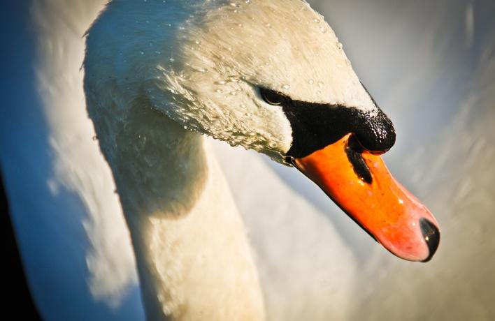 В Москве построят парк с водоплавающими и болотными птицами