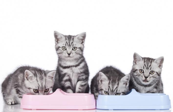 Котенку один месяц: чем его кормить