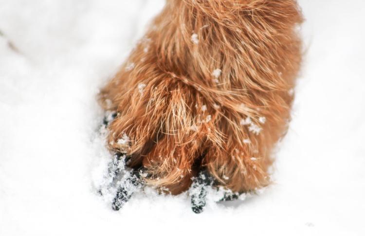 Защитить лапы питомца зимой правильно