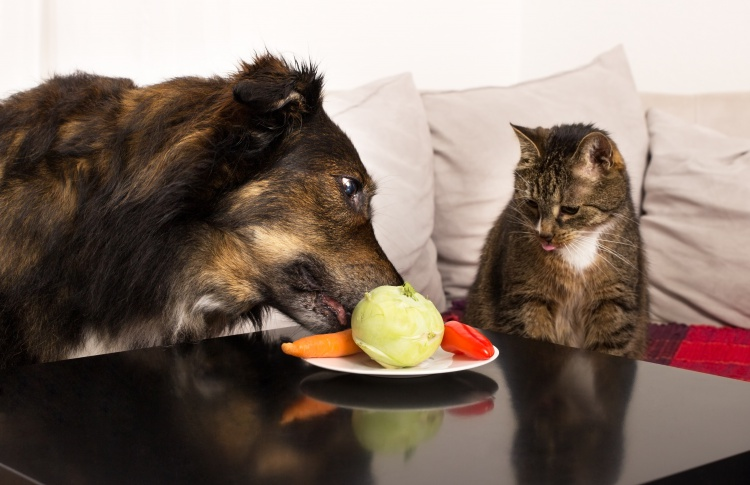 Мифы о «натуральном» питании для кошек и собак