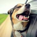 Путешествие на машине: как помочь питомцу ехать комфортно