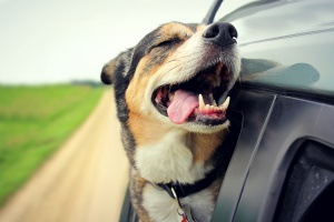 Все условия: как сделать поездку на машине комфортной