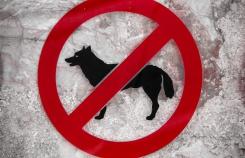 Где можно, а где нельзя гулять с собакой