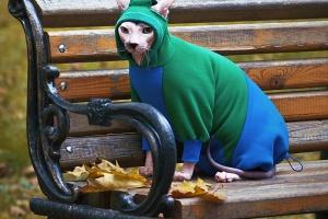 10 мест, где купить костюмчик для животного