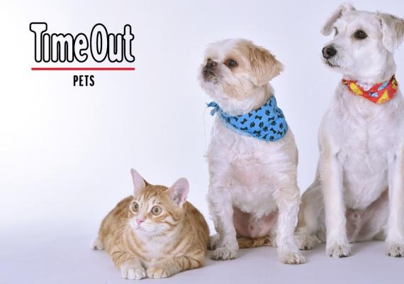 Time Out запустил новый раздел Time Out Pets