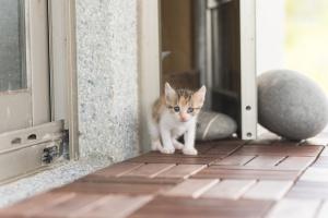 Первые шаги в новом доме