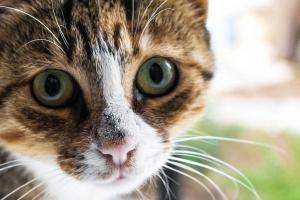 «Мартовский кот»: что это такое и почему эта акция так важна?