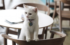 Пожалуйте за стол!