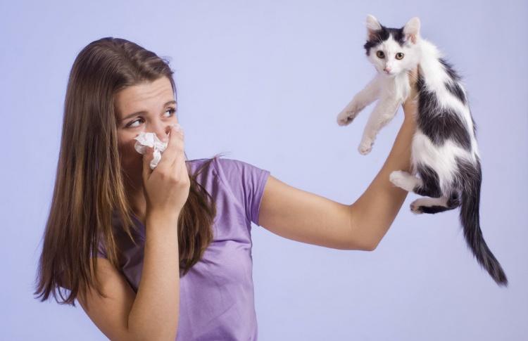Начхал: как бороться с аллергией у питомца