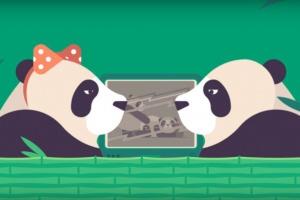 Pornhub предложил пользователям снимать порно в костюмах панд