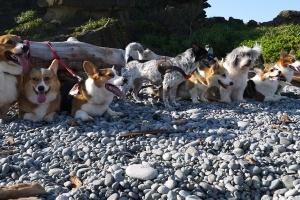 Сколько нужно гулять с собаками