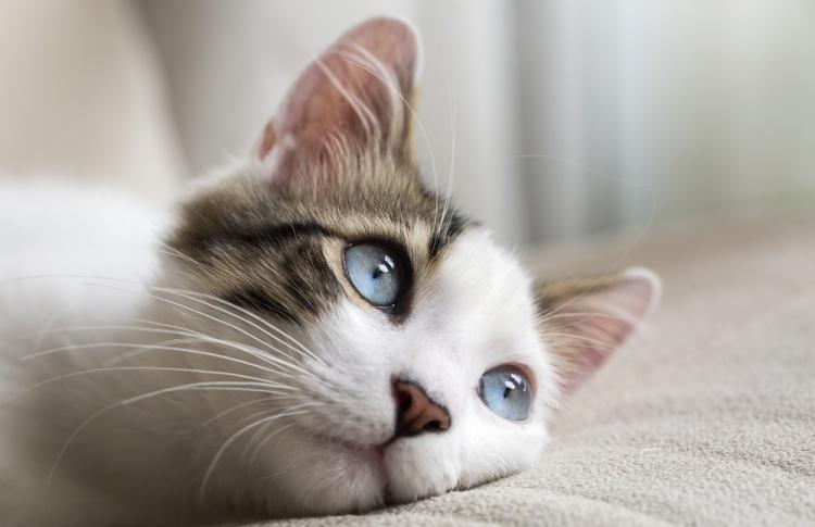 Как защитить кошку от блох?