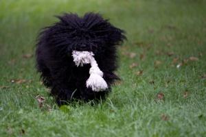 Чем вычесывать собаку