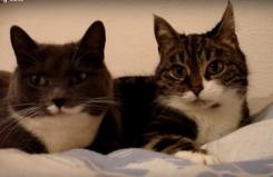 10 самых популярных видео с котами