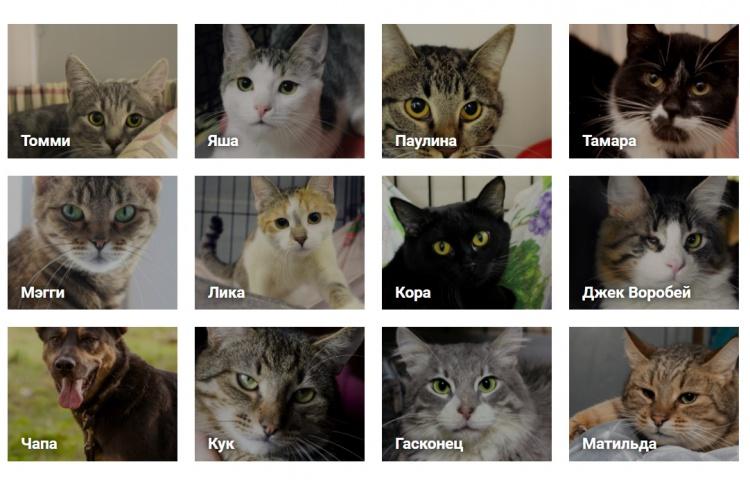 Новый сервис Time Out Pets по поиску хозяев для собак и кошек