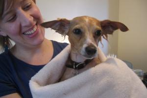 Как сделать мытье пса более комфортным