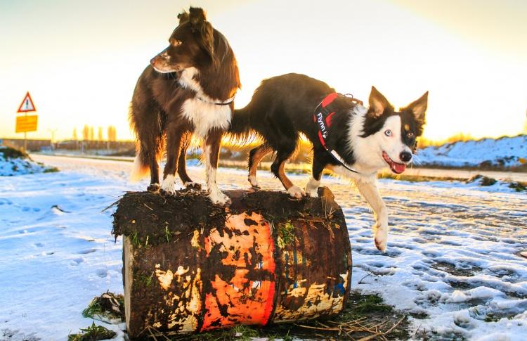 Какие документы должны быть у собаки