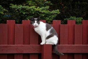 Добро пожаловать, или С животными вход разрешен