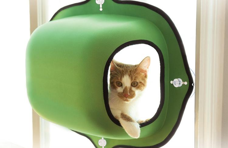 Как выбрать коту место для отдыха?