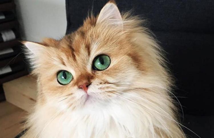 Россияне любят кошек больше, чем где-либо еще в мире