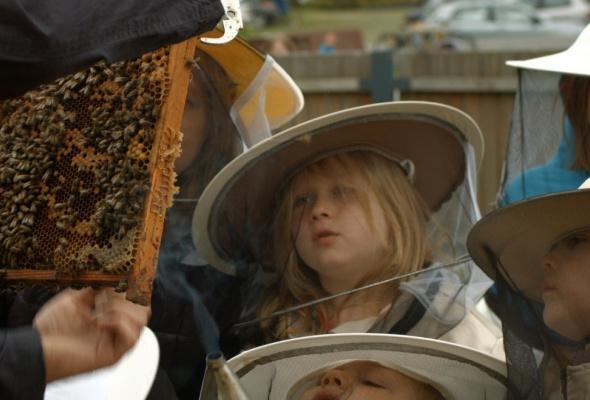 Охотники за медом - Фото №0