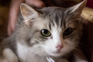 Кошки и собаки из приютов, которых вы можете забрать на этой неделе