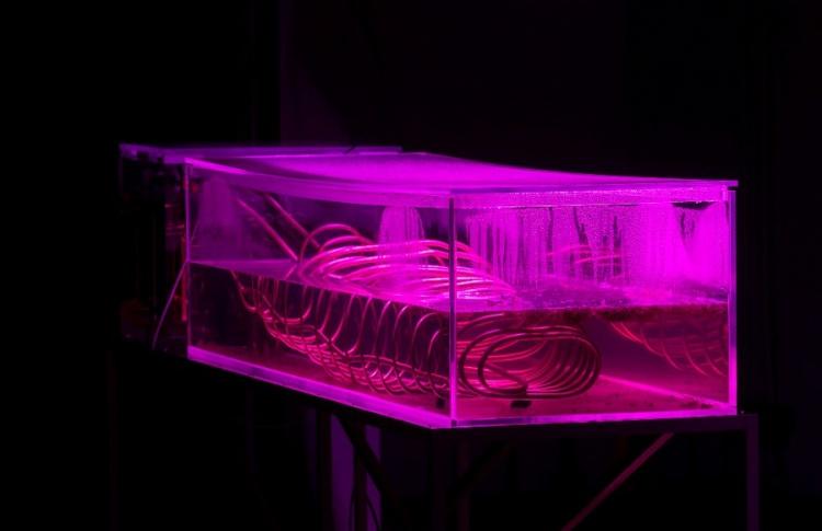 Urban fauna lab. «Городская сауна»