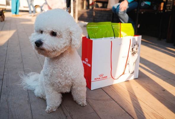 Royal Canin запускает в Москве и Санкт-Петербурге бесплатные ветмобили - Фото №7