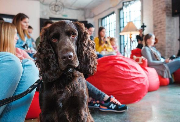 Royal Canin запускает в Москве и Санкт-Петербурге бесплатные ветмобили - Фото №5