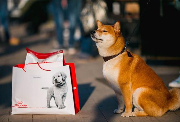 Royal Canin запускает в Москве и Санкт-Петербурге бесплатные ветмобили - Фото №3