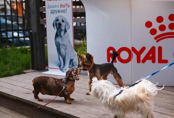 Royal Canin запускает в Москве и Санкт-Петербурге бесплатные ветмобили - Фото №2