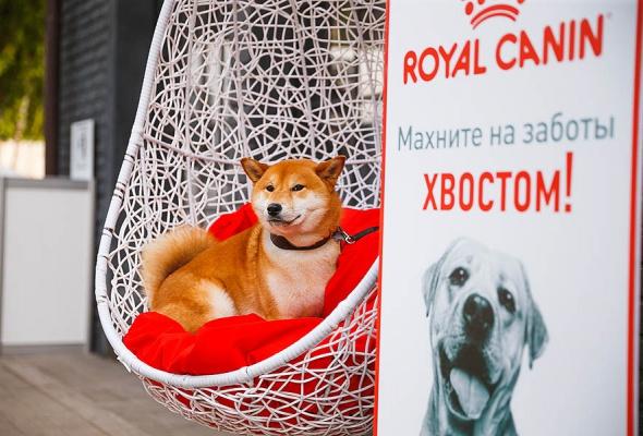 Royal Canin запускает в Москве и Санкт-Петербурге бесплатные ветмобили - Фото №1